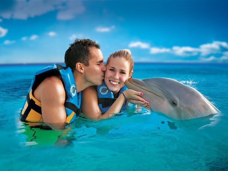 Reasons to visit Anguilla - Dolphin Discovery