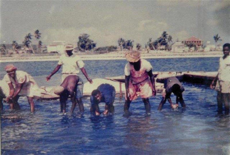 Anguilla salt picking