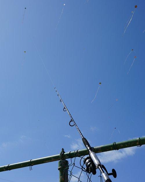 Kites Anguilla Corona virus